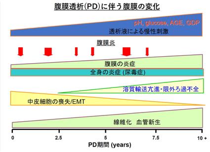 腹膜透析グループ 名古屋大学大学院医学系研究科 腎臓内科